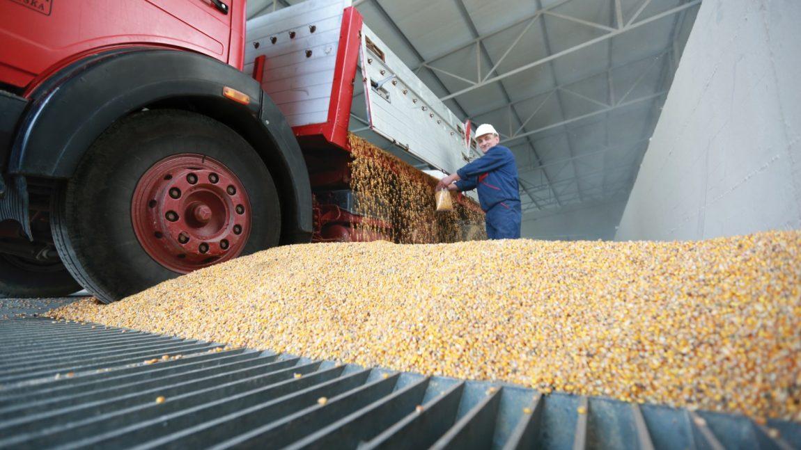 """""""Farmofit"""" otkupljuje soju i kukuruz od domaćih proizvođača"""