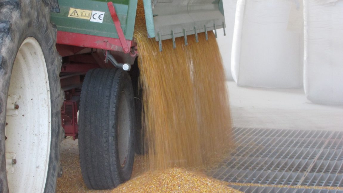 Prijem kukuruza i soje sa domaćih oranica u punom jeku
