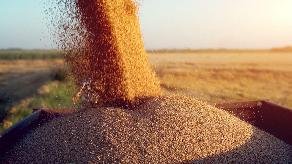 FARMOFIT: USKORO KREĆE PRIJEM ŽITA SA DOMAĆIH ORANICA